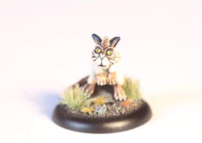 Luxcelot Kitten 1